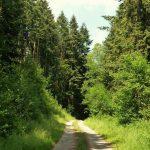 The Smatcher Forest Old Station Caravan & Camping Park